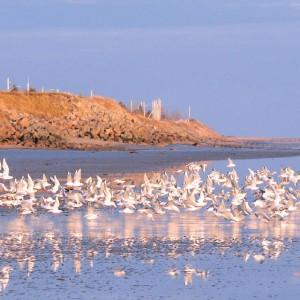 Parc nature de Pointe-aux-Outardes-Edward Brotherton-cote nord