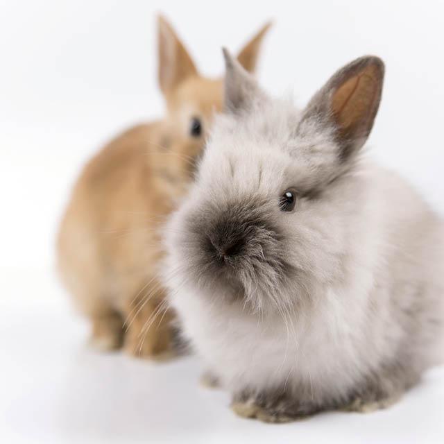 Enfants qu bec je veux avoir un lapin enfants qu bec for Avoir un lapin a la maison